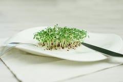 spirat frö groddar kärnar ur kryddkrassegrönsallat gräsplaner arkivfoto