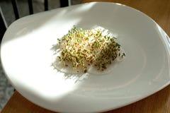 spirat frö groddar kärnar ur kryddkrassegrönsallat gräsplaner royaltyfri bild