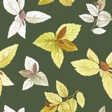spirea Un sistema de hojas Sistema de la pintura de la acuarela de hojas en un fondo blanco ilustración del vector