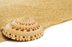 Spired conch shell on the sand Royalty Free Stock Images