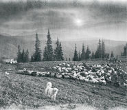 Spirit of antiquity in the mountains. Retro classic black and white tonality of silver photography both ancient and vintage prints subject to shepherd flock of stock photo
