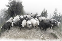 Spirit of antiquity in the mountains. Retro classic black and white tonality of silver photography both ancient and vintage prints subject to shepherd flock of royalty free stock photos