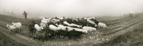 Spirit of antiquity in the mountains. Retro classic black and white tonality of silver photography both ancient and vintage prints subject to shepherd flock of stock image