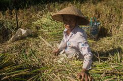 Spirit of the indonesian farmers stock photography