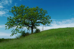 Spirit Wind. Large Oak tree on the side of a Hill. Lagre dream catcher hanging from one branch. Sharp focus over the entire image. Comments welcome Stock Image