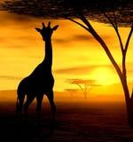 Spirito africano - la giraffa Fotografie Stock Libere da Diritti