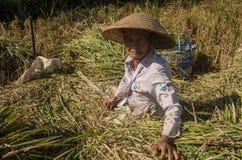 Spirito degli agricoltori indonesiani Fotografia Stock