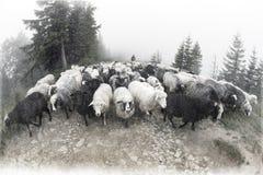 Spirito di antichità nelle montagne Fotografie Stock Libere da Diritti