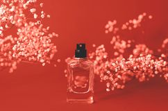 Spirits with live branches of gypsophila coral color royalty free stock photos