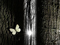 Spiritual butterfly near a tree gap light. A sun beam is shining in a leafless forest, through a narrow gap of trees. A white butterfly gives the scene Royalty Free Stock Photo