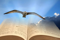 Spiritual freedom. Concept photo of spiritual freedom with seagull flying over open holy bible Stock Photo