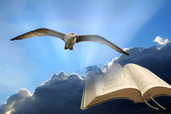 Spiritual freedom. Concept photo of spiritual freedom showing seagull flying high in the sky with open bible set against storm clouds and sun rays taken 15th stock photo