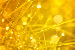 Spiritual light on grass. Closeup of spiritual golden and blurry grass with water droplets Royalty Free Stock Photos