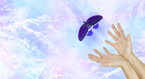 Spiritual Release. Female hands with a large indigo colored butterfly moving away and up on an ethereal blue woodland background metaphor depicting a departing Stock Photos