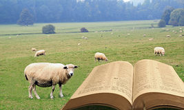 Spiritual sheep royalty free stock photos