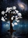 Spiritual Tree Royalty Free Stock Photo