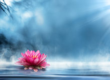 Spiritualiteit zen met waterlily Royalty-vrije Stock Foto's