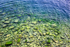 Spirogyra in bottom rocks in water of Lake Baikal. Foreign body is clogging lake, creating threat of ecological catastrophe Royalty Free Stock Photos