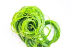 Spirogyra verde no fundo branco, opini?o superior da textura dos testes padr?es da natureza das algas fotos de stock