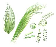Watercolor spirulina set. Spirulina set, watercolor illustration  on white background Royalty Free Stock Photography