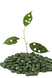 Spirulina tablets. And green plant Royalty Free Stock Photos