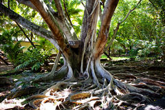 Spiry roots Royalty Free Stock Photos
