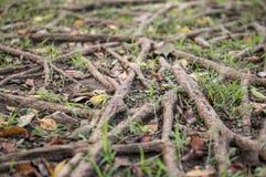 Spiry roots Stock Photo