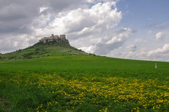The Spis Castle with flowers on meadow - Spissky hrad National C. The Spis Castle with flowers on medow - Spissky hrad National Cultural Monument (UNESCO) ruins royalty free stock photography