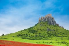 Spis Castle at spring. Spis Castle on the hill with blooming poppy field and green field on the North of Slovakia stock photos