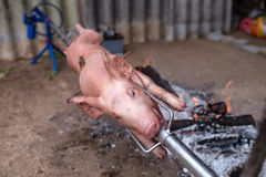 Spit roasted pig Stock Photo