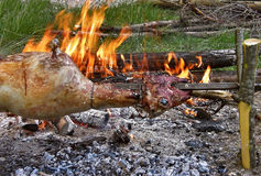 Spit roasting. Lamb being roasted whole on a spit over open fire in nature Royalty Free Stock Photos