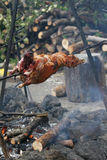 Spit roasting. Lamb being roasted whole on a spit over open fire in medieval settings Stock Image