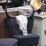 Spitalfields滑稽的市场 水牛头骨在老葡萄酒椅子 免版税库存图片
