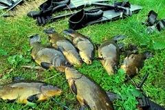 spitted Fisk och utrustning för spearfishing royaltyfri foto