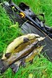 spitted Utrustning för spearfishing och fisk royaltyfri fotografi