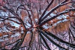 Spittin'-Bilder Stockbild