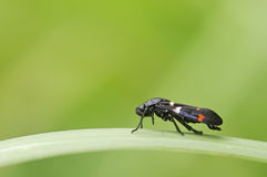 Spittle Bug on grass Royalty Free Stock Images