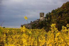 Spitz castle with autumn vineyard in Wachau valley, Austria. royalty free stock photography