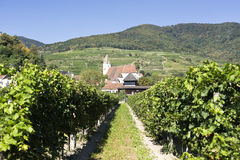 Spitz Church and Vineyards Royalty Free Stock Photos