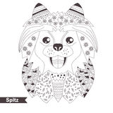 Spitz. Coloring book for adult Royalty Free Stock Image