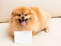 Spitz de hond zit naast de kaart royalty-vrije stock afbeeldingen