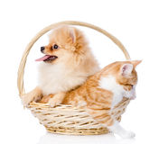 Spitz dog embraces a cat in basket. Royalty Free Stock Photos