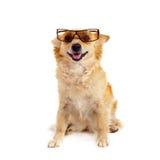 Spitz dog on white background Stock Photo