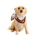 Spitz dog on white background Stock Photography