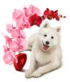 Spitz japonês e um ramalhete das flores Imagens de Stock Royalty Free