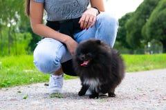 Spitz Pomeranian κουταβιών με τον ιδιοκτήτη του Νέο ενεργητικό σκυλί σε έναν περίπατο Μουστάκια, πορτρέτο, κινηματογράφηση σε πρώ στοκ φωτογραφία με δικαίωμα ελεύθερης χρήσης
