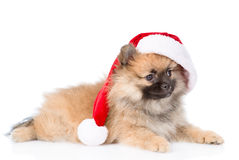 Spitz puppy dog with red christmas Santa hat. isolated on white Stock Photography