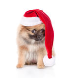Spitz puppy dog with red christmas Santa hat  on white Royalty Free Stock Photography