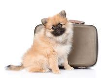 Spitz puppy sitting near a vintage suitcase on white Stock Image