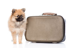 Spitz puppy with vintage suitcase on white background Royalty Free Stock Photos
